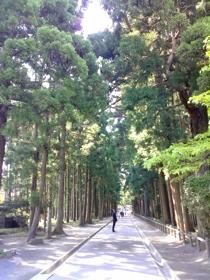 瑞巌寺の杉林